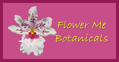 Flower Me Botanicals Body Butter and Detox